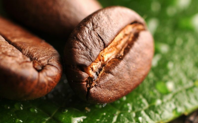 water leaves macro coffee beans depth of field wallpaper