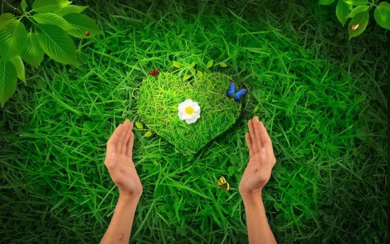 nature hearts wallpaper