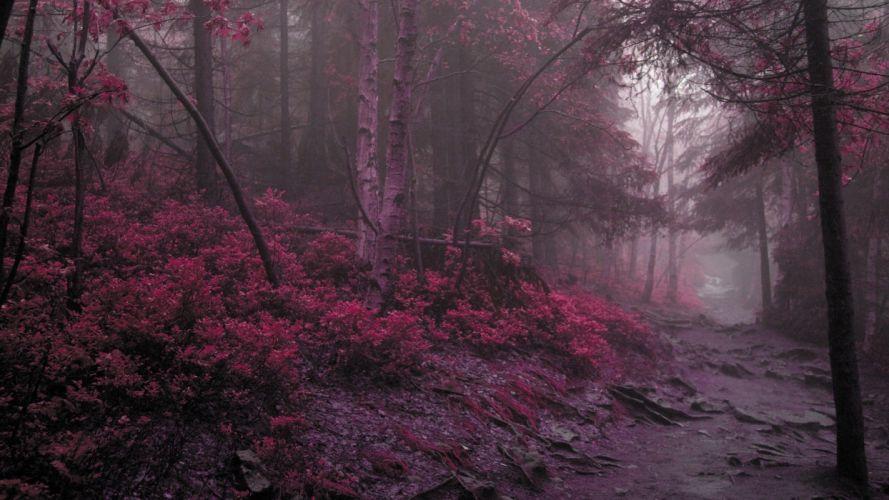 landscapes nature forests purple wallpaper