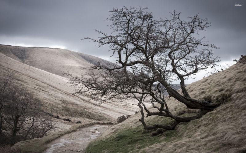 23075-hillside-hawthorn-2560x1600-nature-wallpaper wallpaper