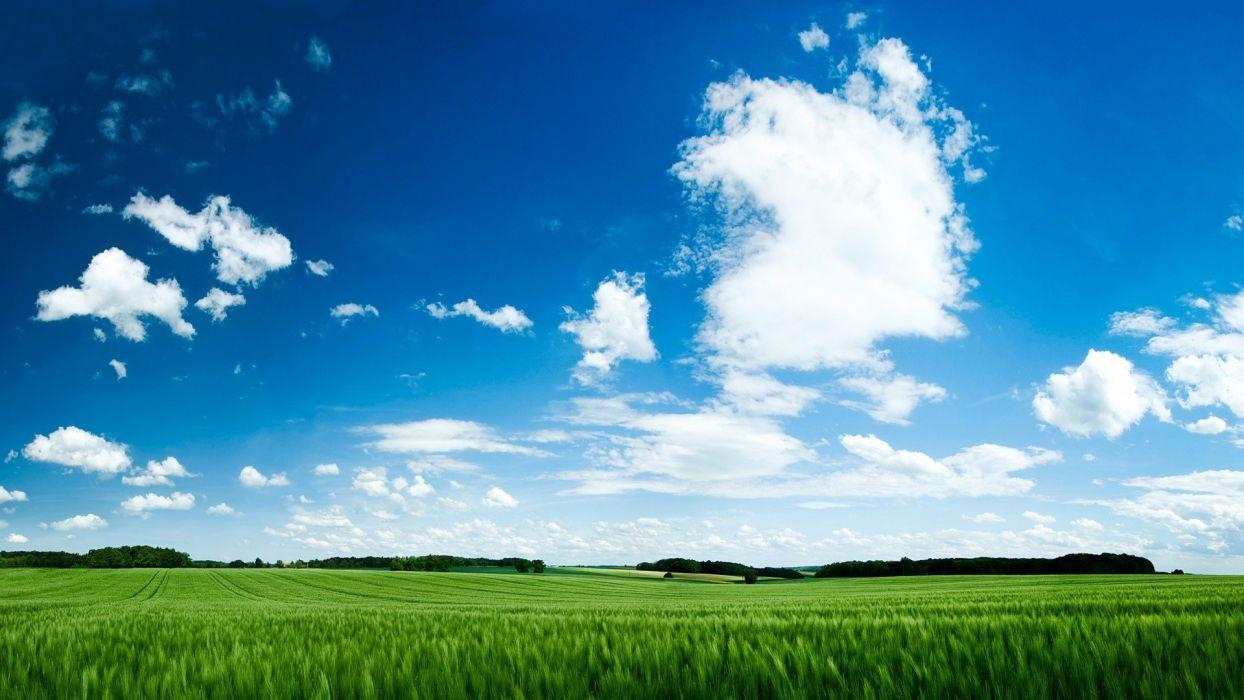 endless-green-field-nature-hd-wallpaper-1920x1080-3802 wallpaper