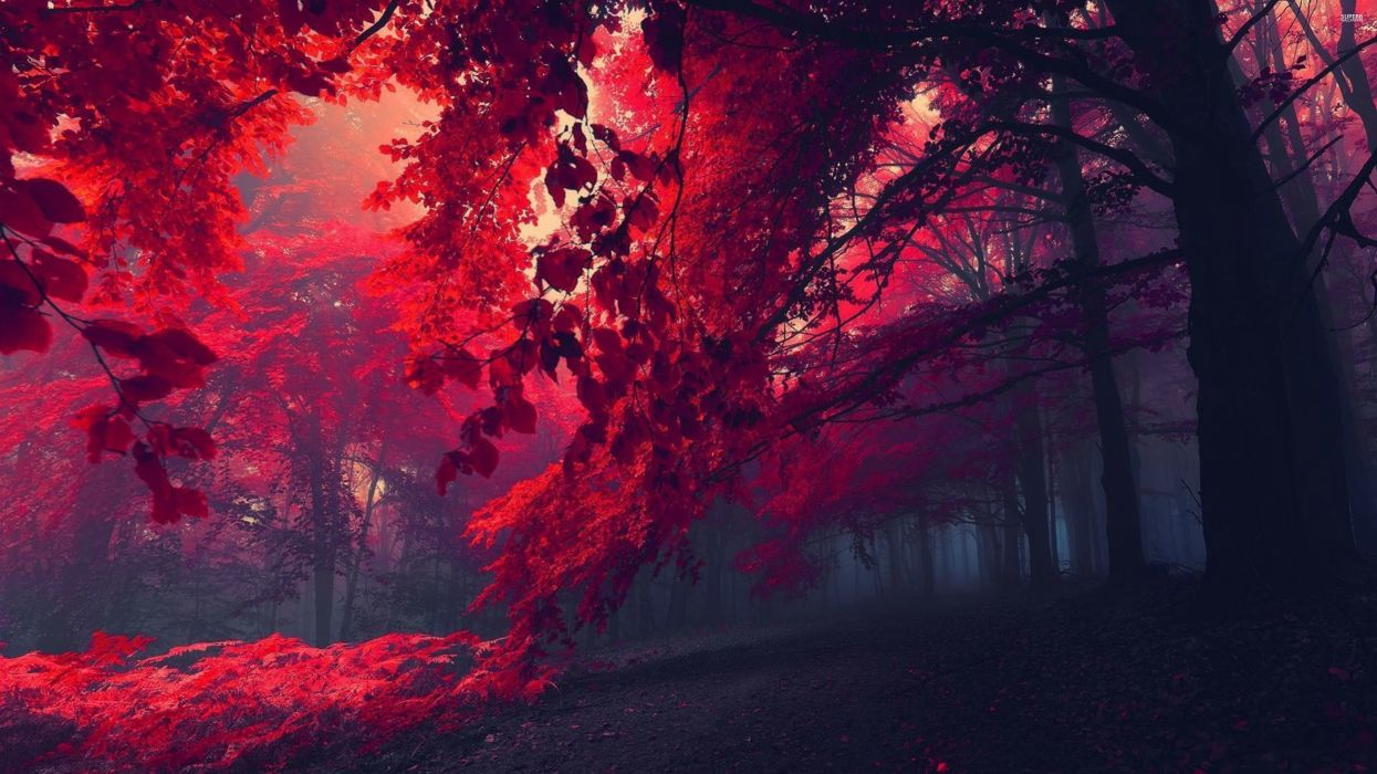red-forest-26750-3840x2160 wallpaper