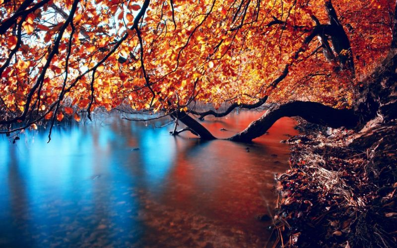 tree-curved-in-the-river-14971 wallpaper