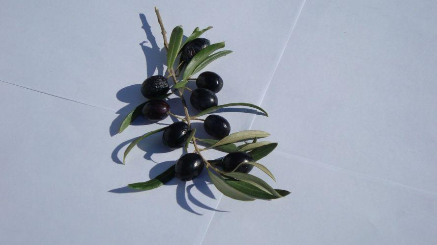 floor leaves ege olives branches wallpaper