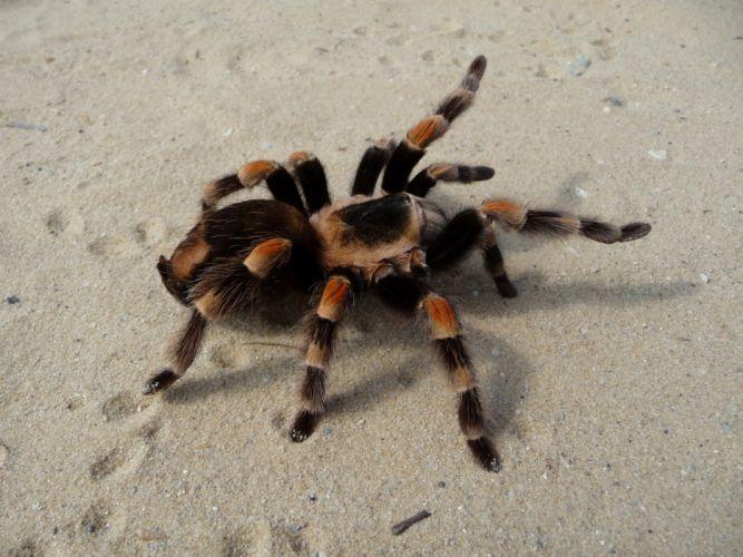 animals spiders arachnids wallpaper
