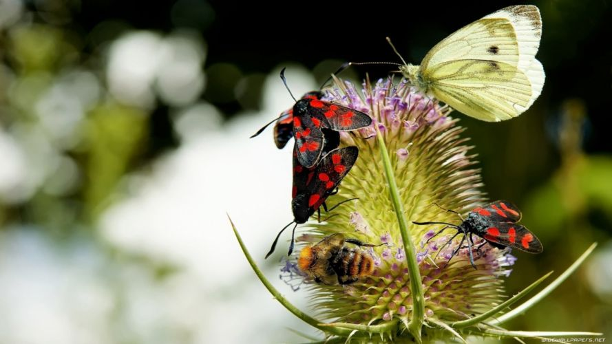 nature insects butterflies wallpaper