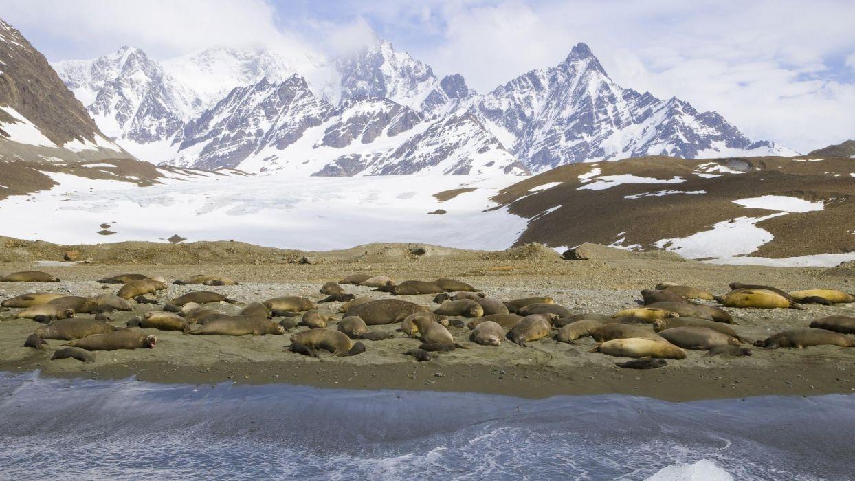 seals Georgia islands south range Southern wallpaper