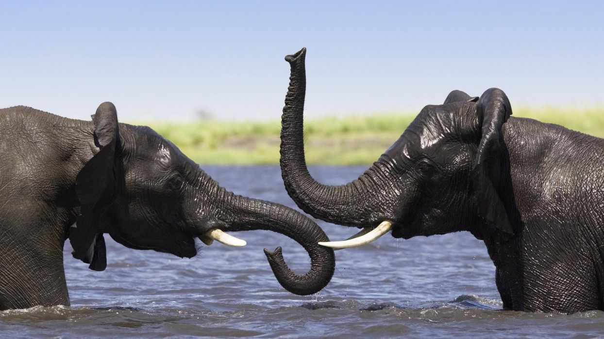 animals elephants Africa wallpaper