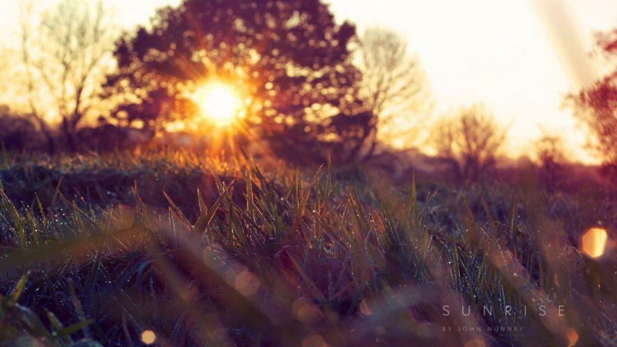 landscapes nature Sun grass disk branches wallpaper