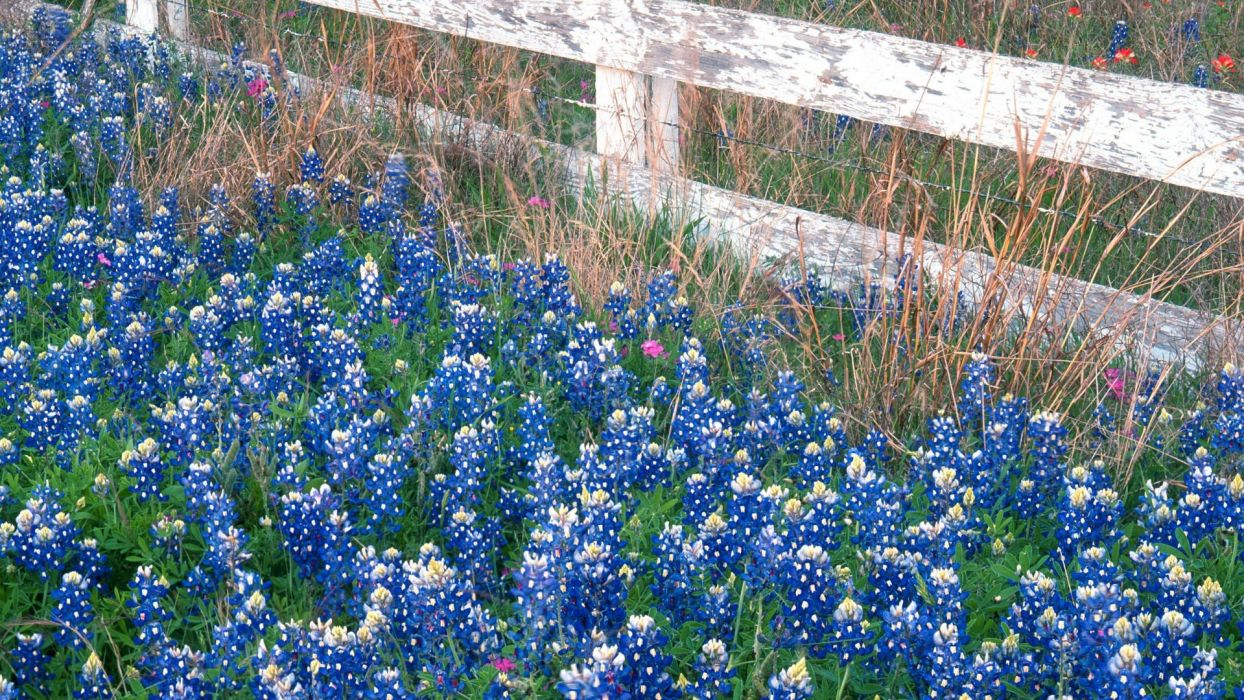 flowers Country falls Texas marbles wallpaper