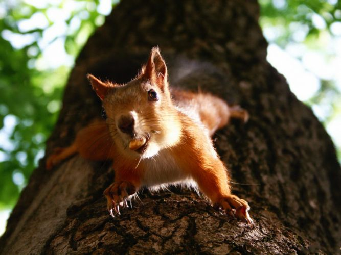 animals squirrels wallpaper