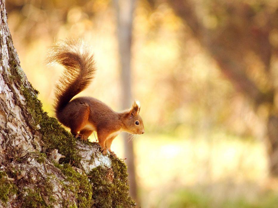 nature trees squirrels focused wallpaper