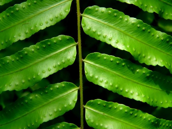 green nature leaves ferns wallpaper