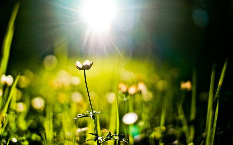 nature grass plants bokeh sunlight sunny wallpaper