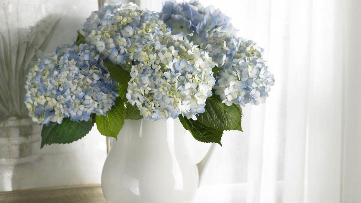 flowers vases hydrangea wallpaper