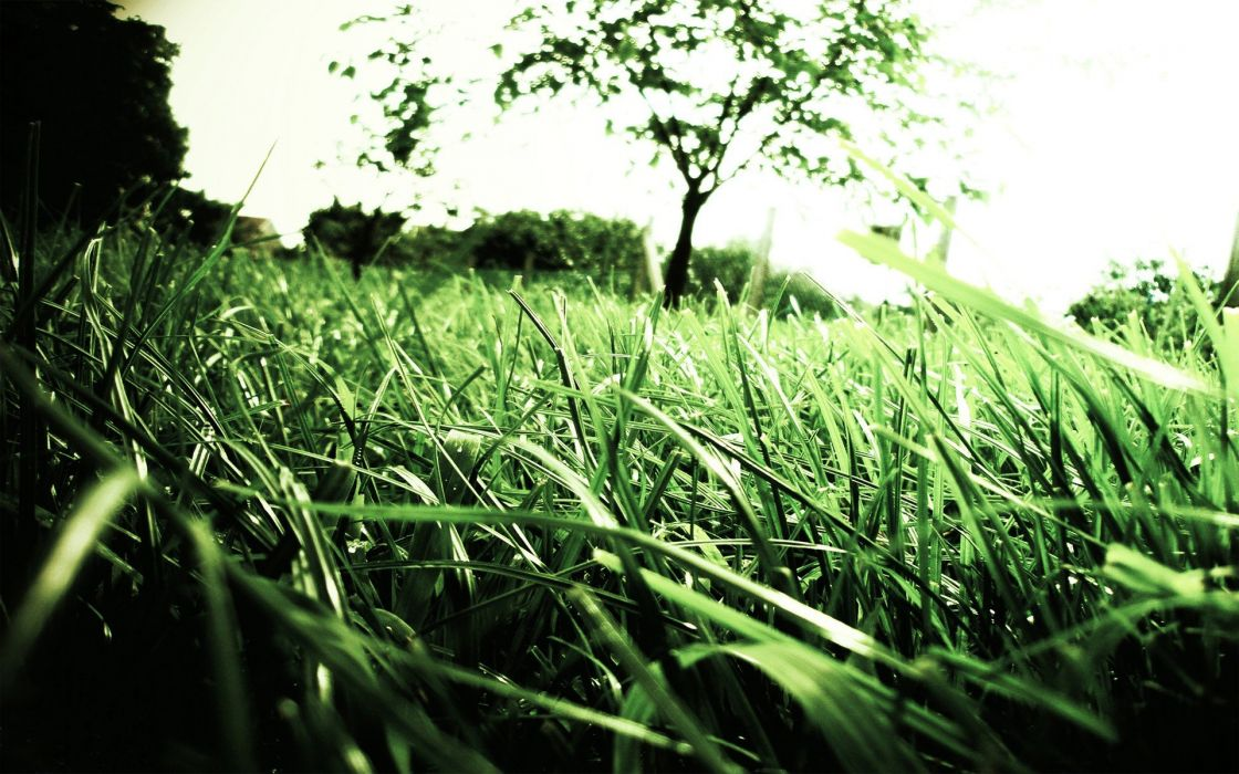 green nature trees grass macro depth of field wallpaper