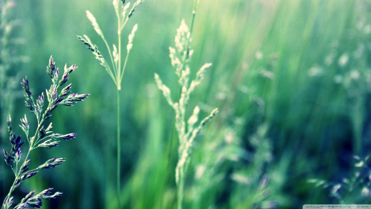 nature plants macro depth of field wallpaper