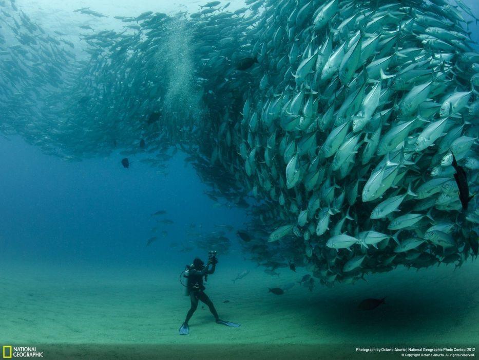 animals fish National Geographic wallpaper