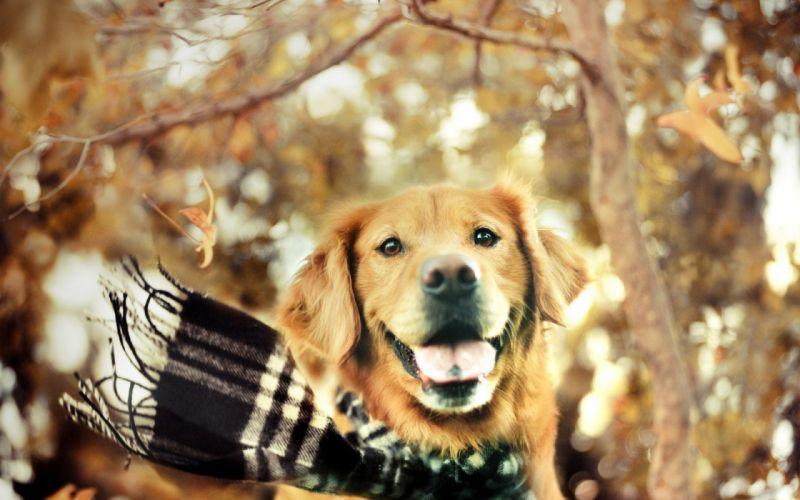 animals dogs wallpaper