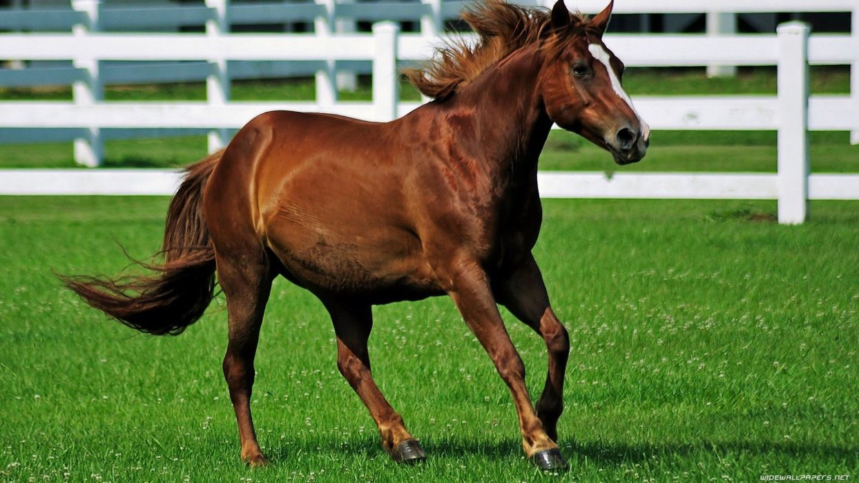 green nature fences animals grass fields horses running wallpaper
