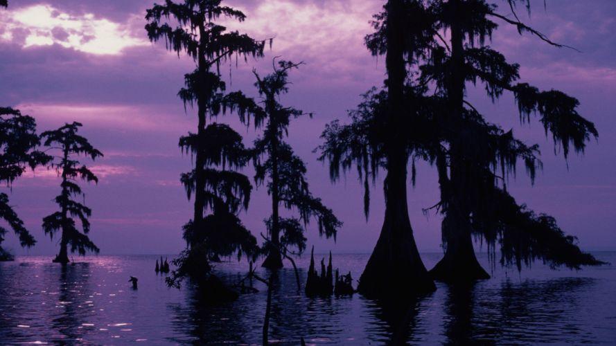 purple swamp wallpaper