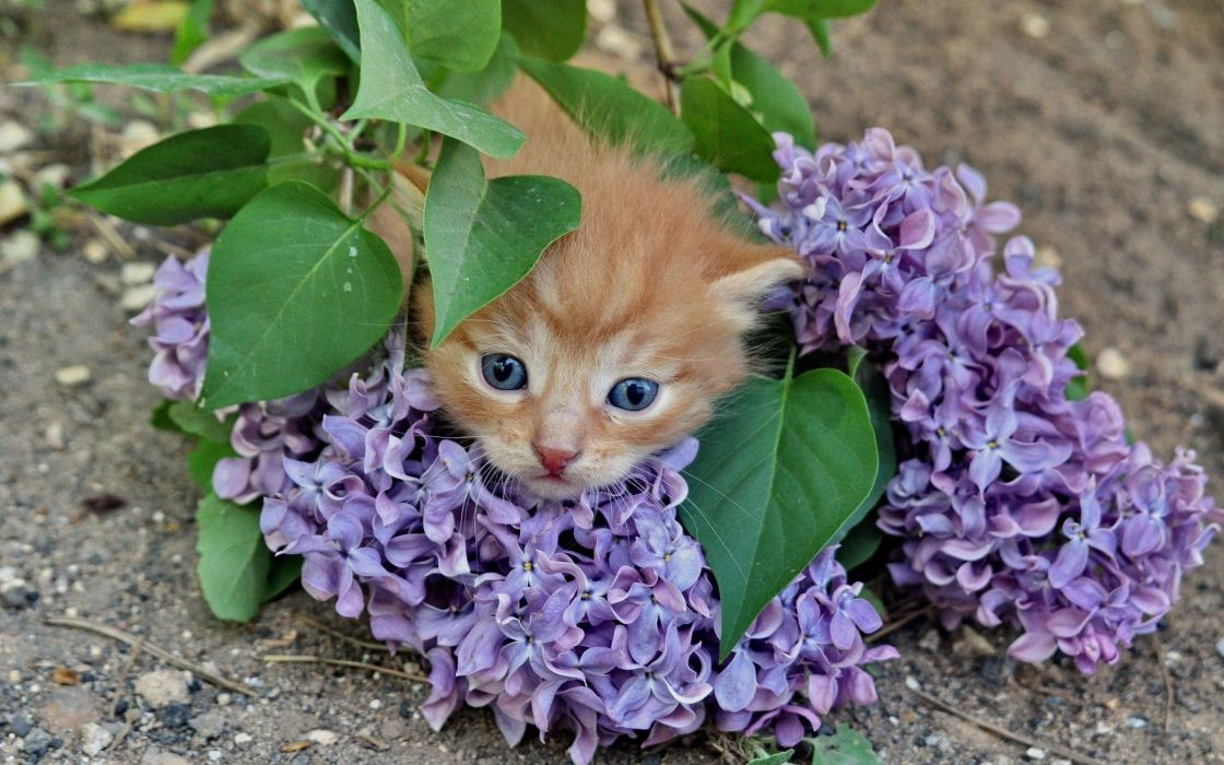 cats animals purple flowers wallpaper