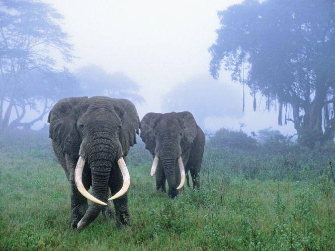 elephants African Tanzania area wallpaper