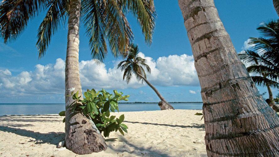 islands palm trees bay Honduras wallpaper