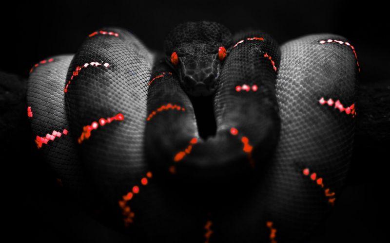 snakes selective coloring wallpaper
