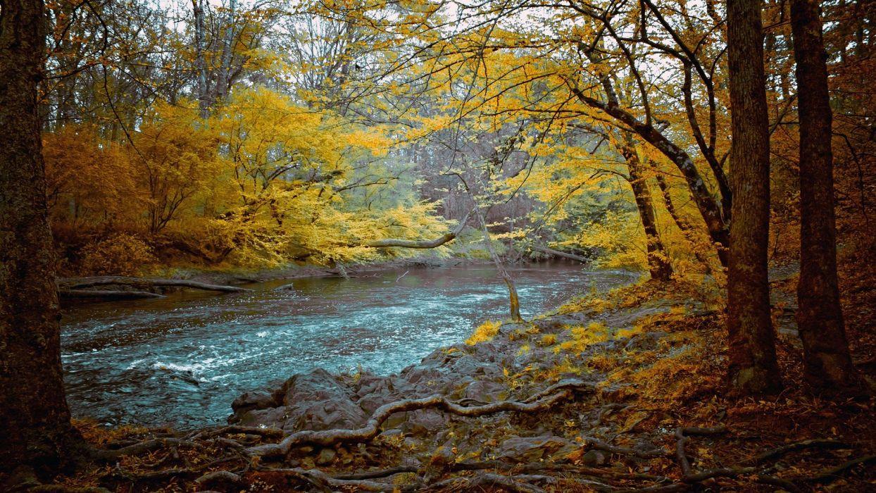 landscapes nature trees autumn rivers wallpaper