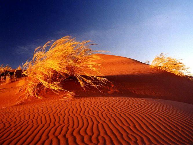 deserts sand dunes Africa bushes Namib Desert wallpaper