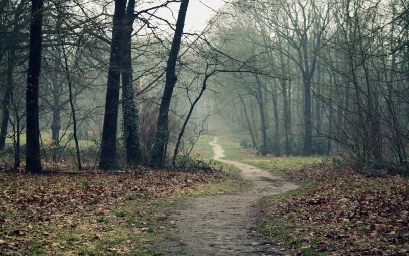 landscapes nature autumn wood leaves Earth fog track wallpaper