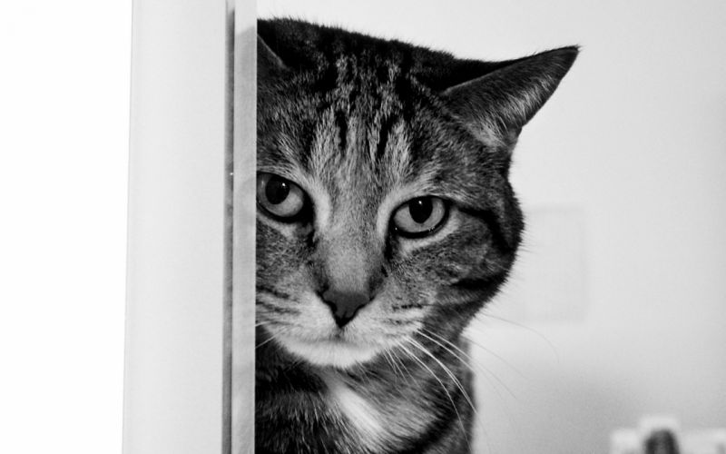 cats monochrome wallpaper