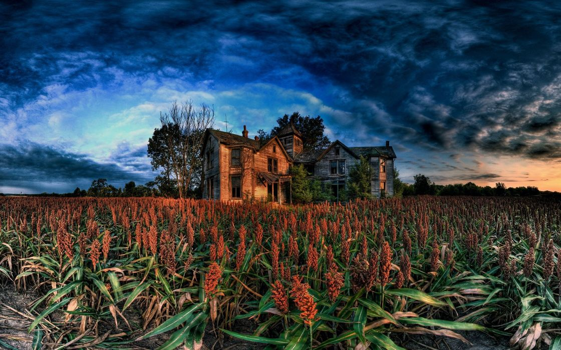 Landscapes Fields Corn HDR Photography Cornfield Old House Wallpaper