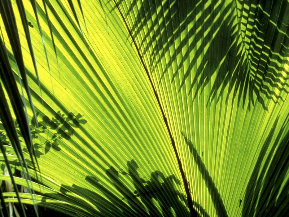 nature Seychelles palm leaves wallpaper