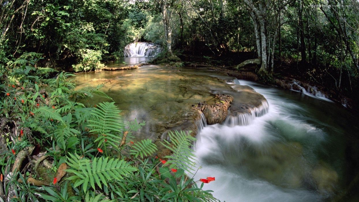water landscapes nature trees forests rivers wallpaper