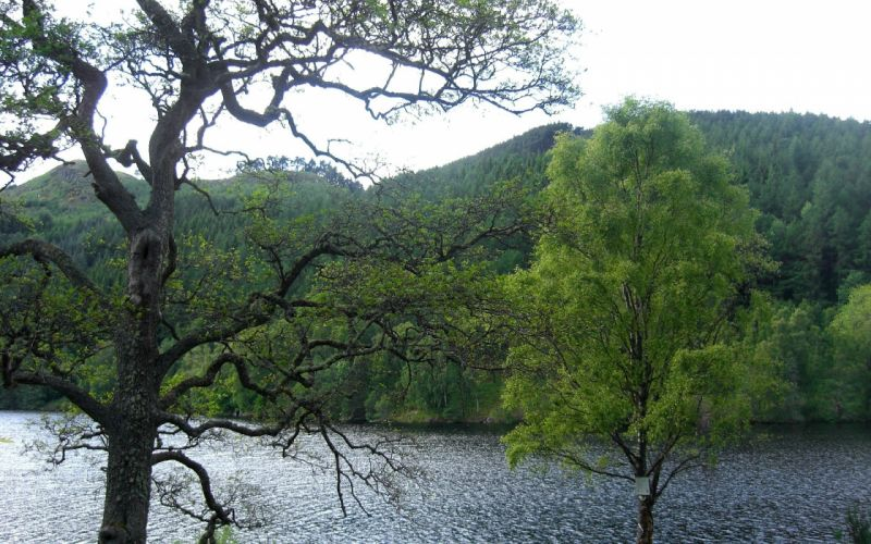 landscapes nature trees forests hills Scotland lakes wallpaper