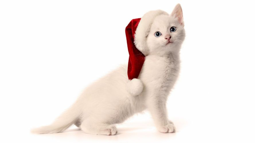 cats animals Christmas hat wallpaper