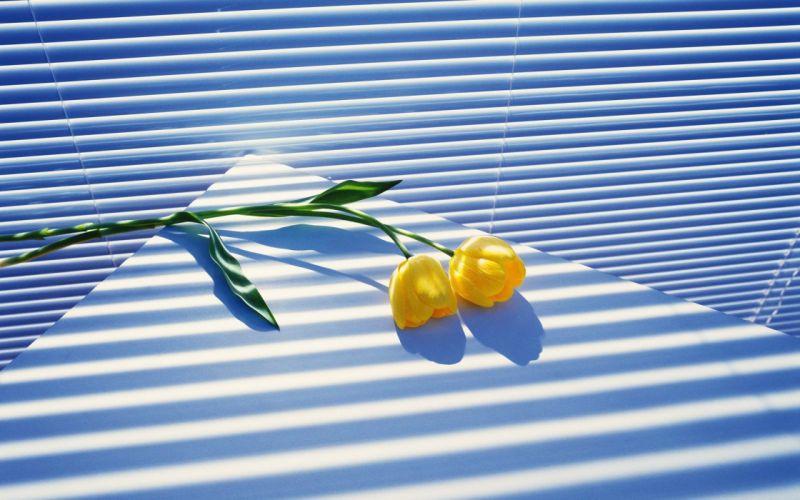 light nature shadows tulips stripes yellow flowers wallpaper