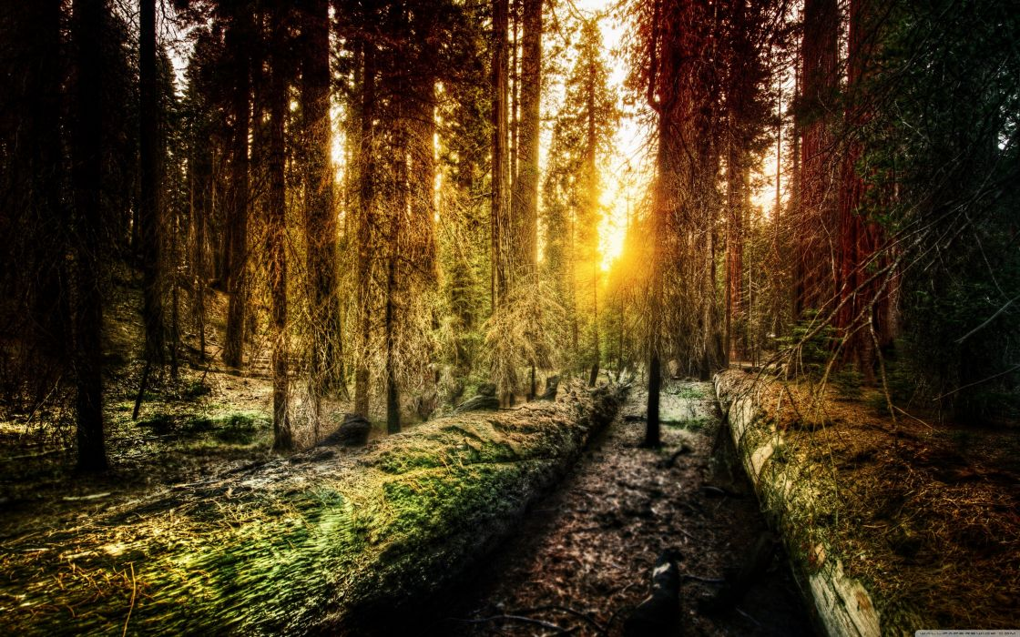 nature forests old Yosemite National Park wallpaper