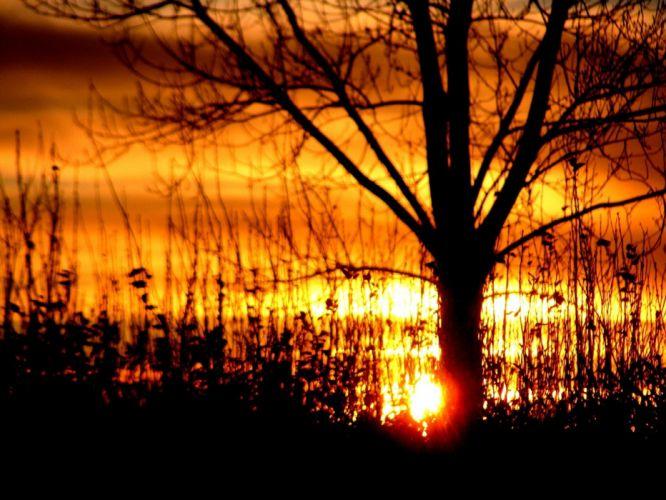 sunset nature trees silhouettes sunlight wallpaper