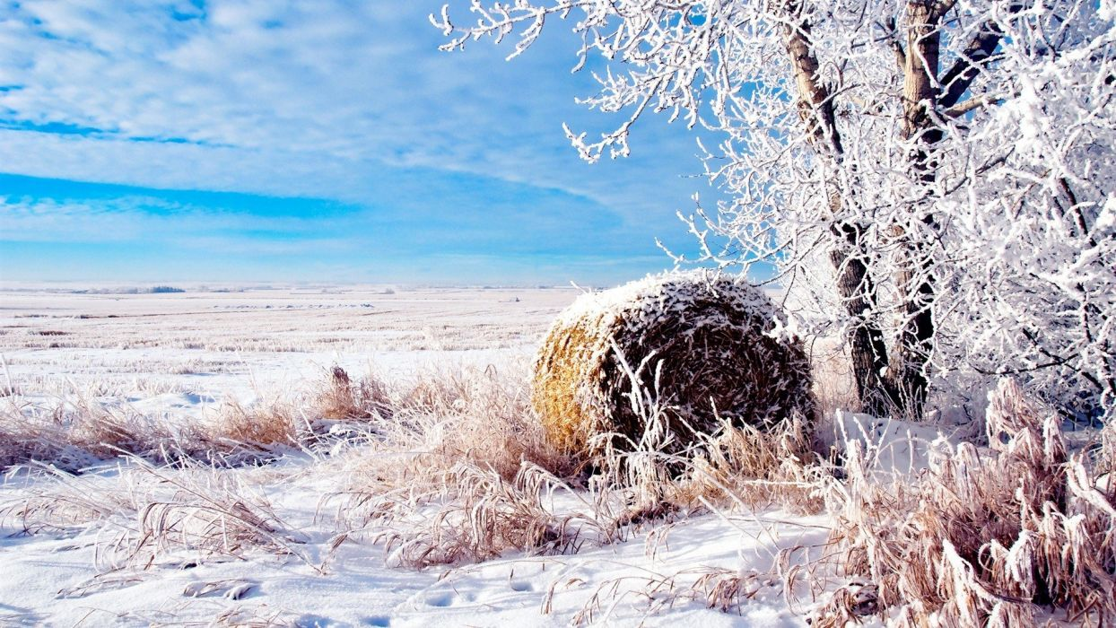 landscapes nature winter snow fields wheat natural scenery wallpaper