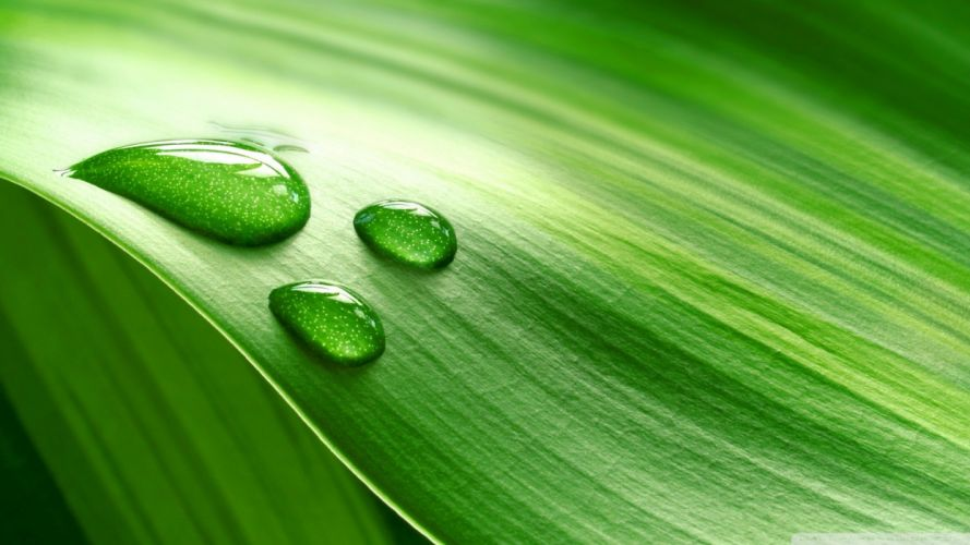 abstract drop leaves wallpaper
