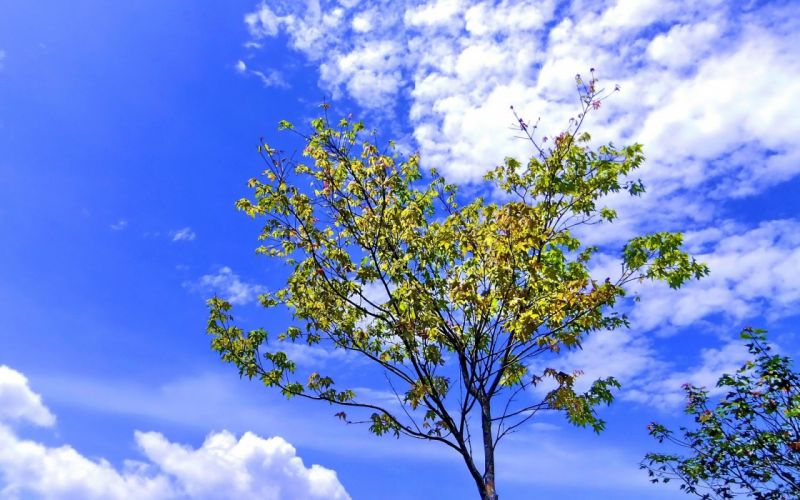 clouds nature trees wallpaper