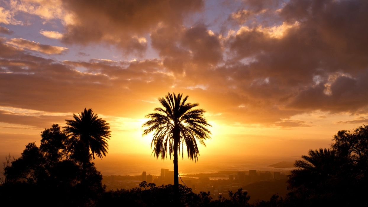 sunset landscapes trees silhouettes Hawaii palm trees Oahu wallpaper