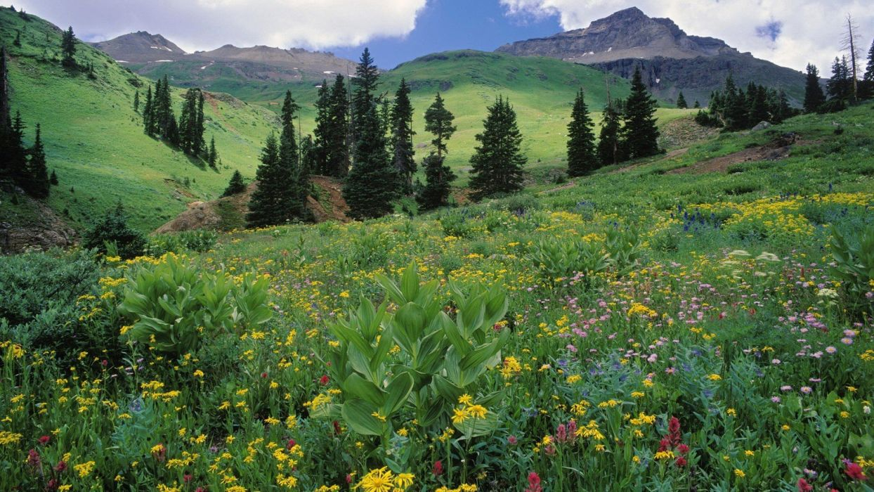 mountains landscapes nature meadows Colorado wildflowers wallpaper