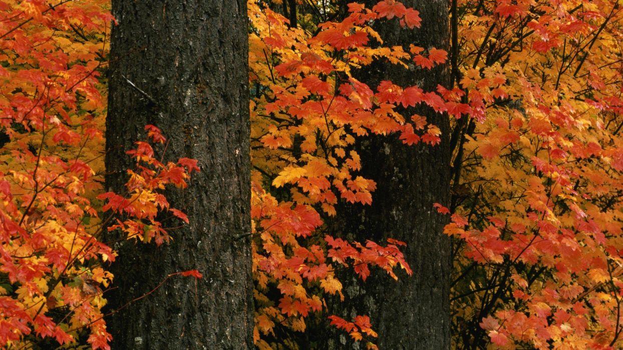 autumn hills Ohio parks wallpaper