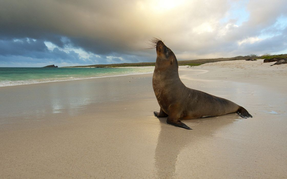 seals animals sea beaches wallpaper