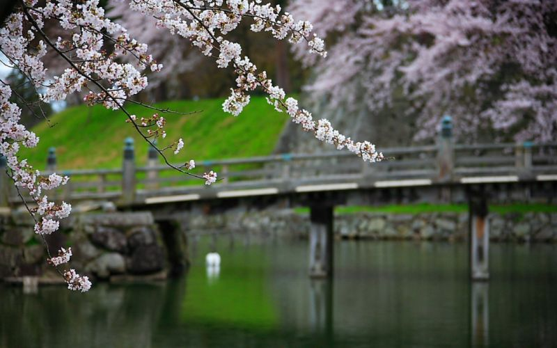Japan nature garden bridges blossoms wallpaper