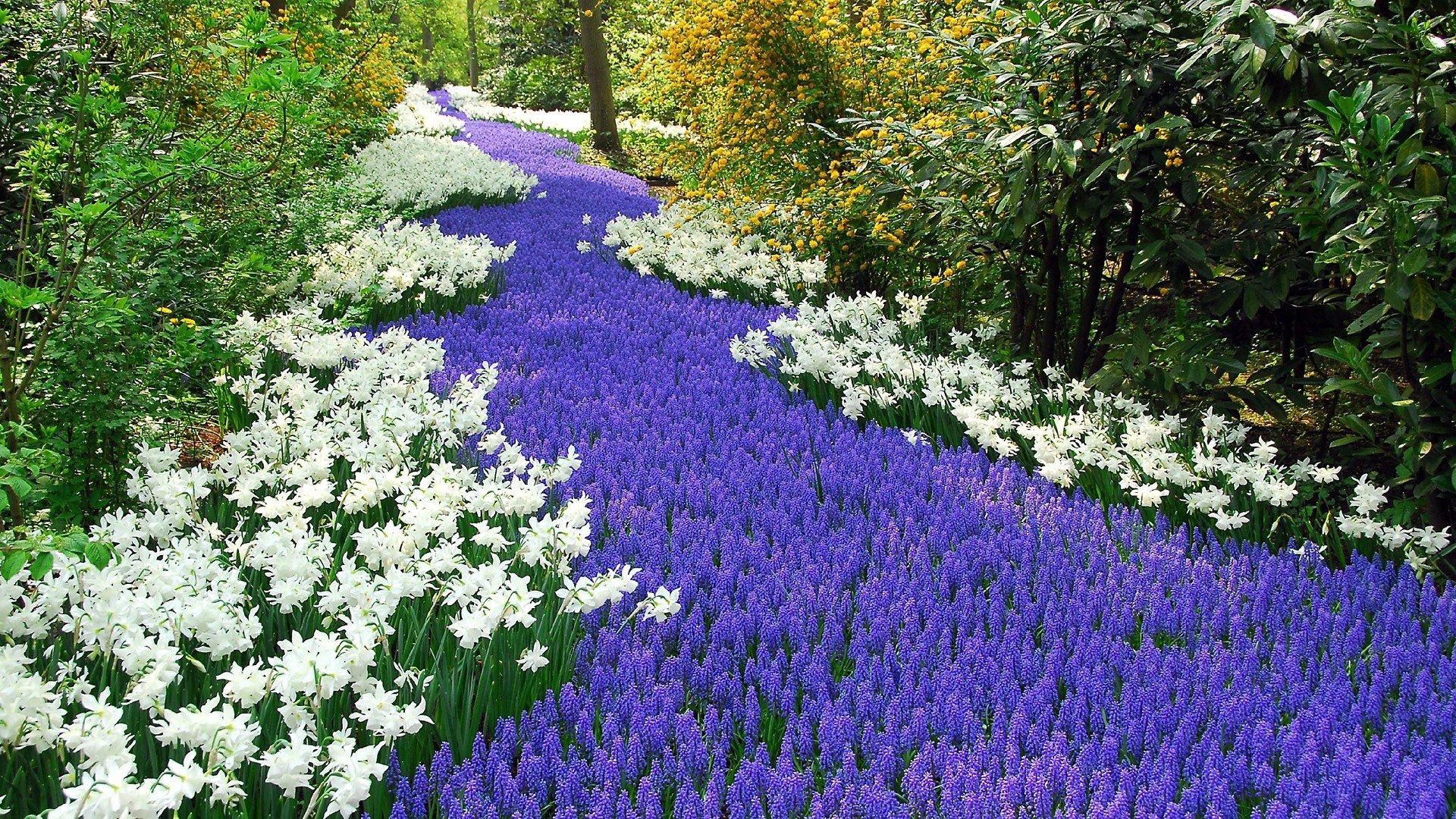 Experience Dutch nature - Holland.com